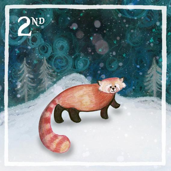 panda_568